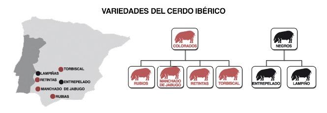variedades cerdo iberico valniezo